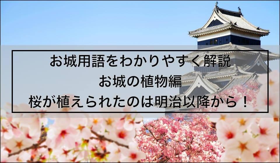 お城用語をわかりやすく解説 お城の植物編 桜が植えられたのは明治から!