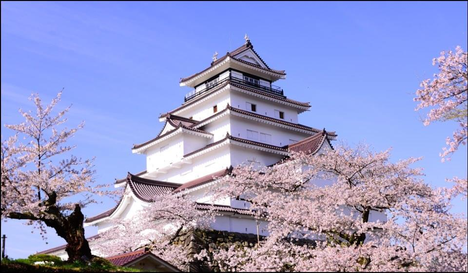 会津若松城天守と桜