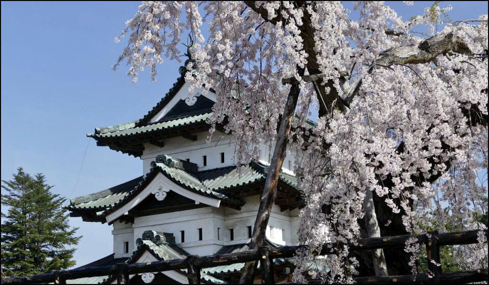 桜と弘前城天守