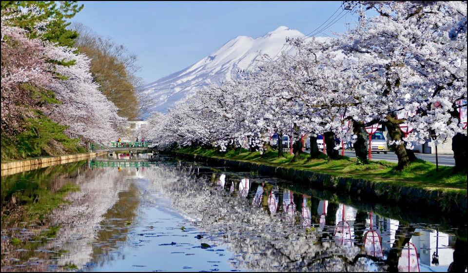 桜の名所になっている弘前城