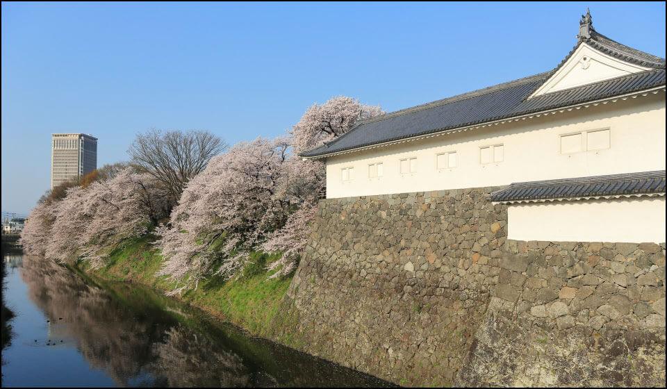 山形城の桜