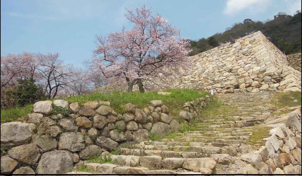 鳥取城の桜と石垣