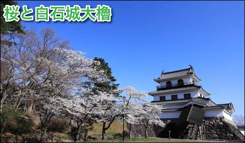 桜と白石城大櫓